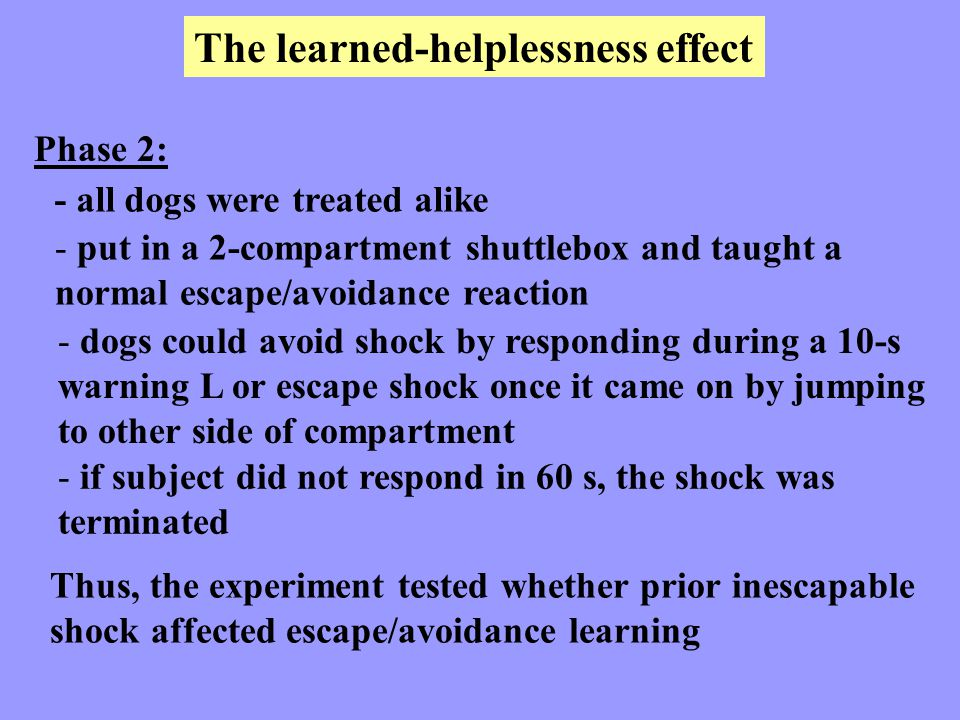 The learned-helplessness effect Phase 2: - all dogs were treated alike - put in a 2-compartment shuttlebox and taught a normal escape/avoidance reacti
