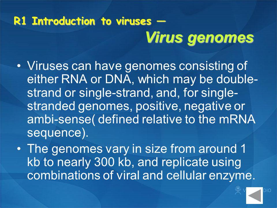 Phylogeny of Retroviruses