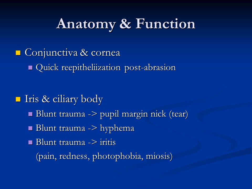 Anatomy & Function Conjunctiva & cornea Conjunctiva & cornea Quick reepitheliization post-abrasion Quick reepitheliization post-abrasion Iris & ciliary body Iris & ciliary body Blunt trauma -> pupil margin nick (tear) Blunt trauma -> pupil margin nick (tear) Blunt trauma -> hyphema Blunt trauma -> hyphema Blunt trauma -> iritis Blunt trauma -> iritis (pain, redness, photophobia, miosis)