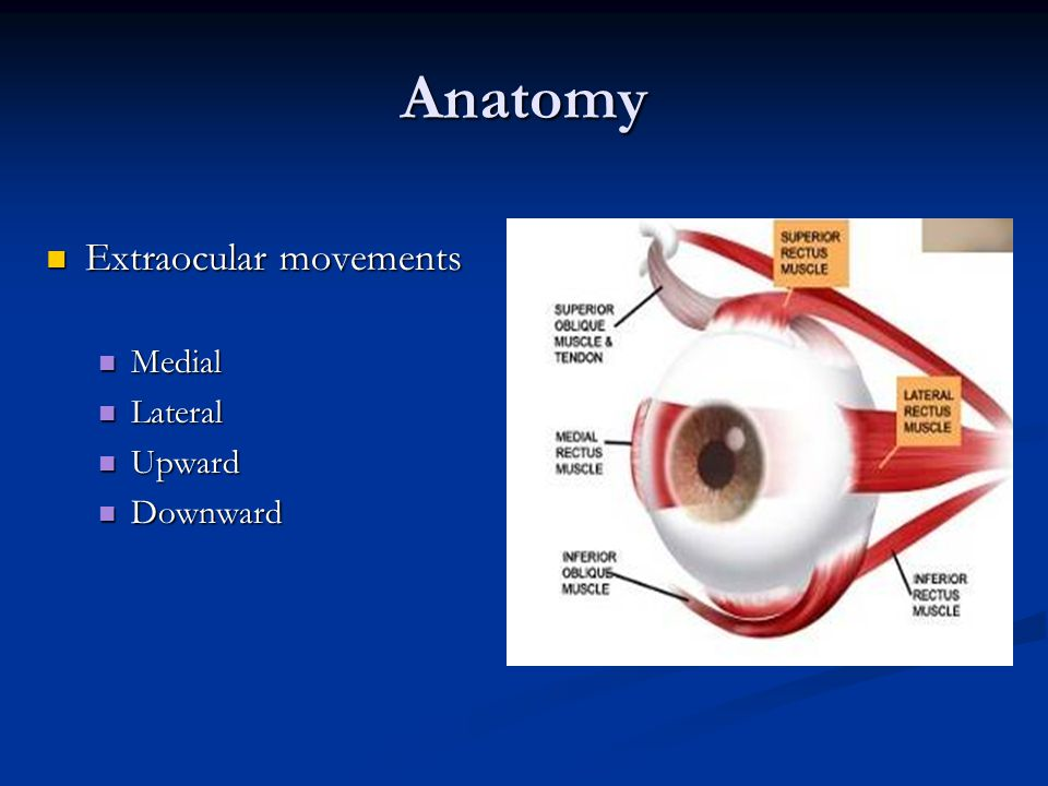 Anatomy Extraocular movements Extraocular movements Medial Medial Lateral Lateral Upward Upward Downward Downward