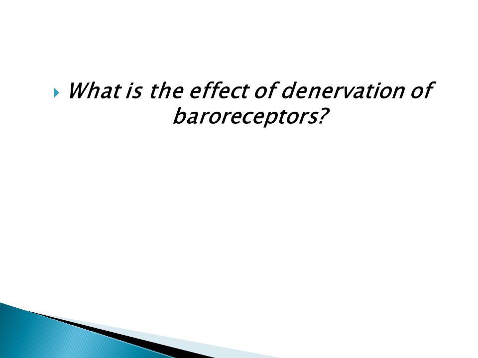  What is the effect of denervation of baroreceptors?