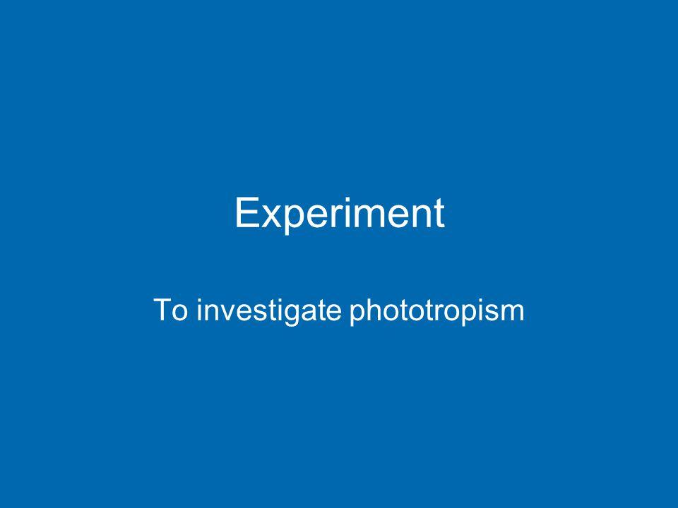 Experiment To investigate phototropism