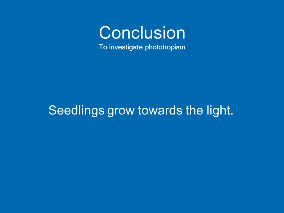 Conclusion To investigate phototropism Seedlings grow towards the light.