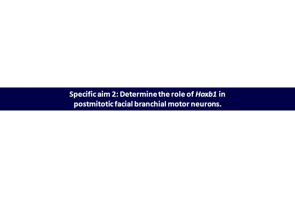 Specific aim 2: Determine the role of Hoxb1 in postmitotic facial branchial motor neurons.