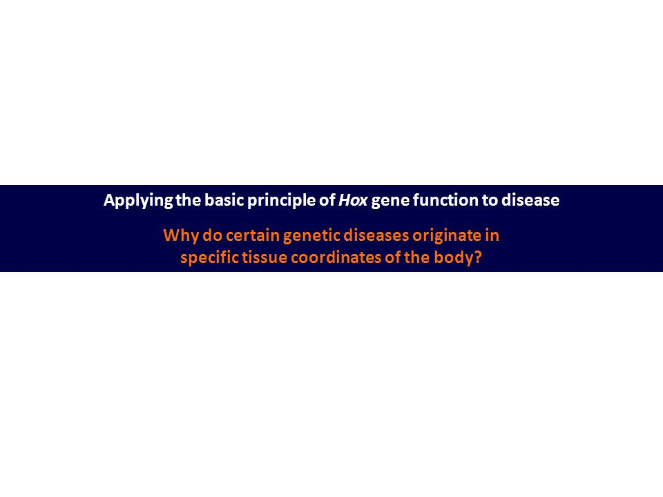 Applying the basic principle of Hox gene function to disease Why do certain genetic diseases originate in specific tissue coordinates of the body