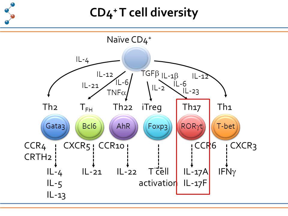 CD4 + T cell diversity Naïve CD4 + Th2iTregTh1Th17Th22T FH T-bet ROR  t Foxp3AhRBcl6 Gata3 CCR4 CRTH2 CXCR3CCR6CCR10CXCR5 IL-4 IL-5 IL-13 IL-21IL-22T cell activation IL-17A IL-17F IFN  IL-4 IL-21 IL-12 TNF  IL-6 TGF  IL-6 IL-2 IL-12 IL-1  IL-23