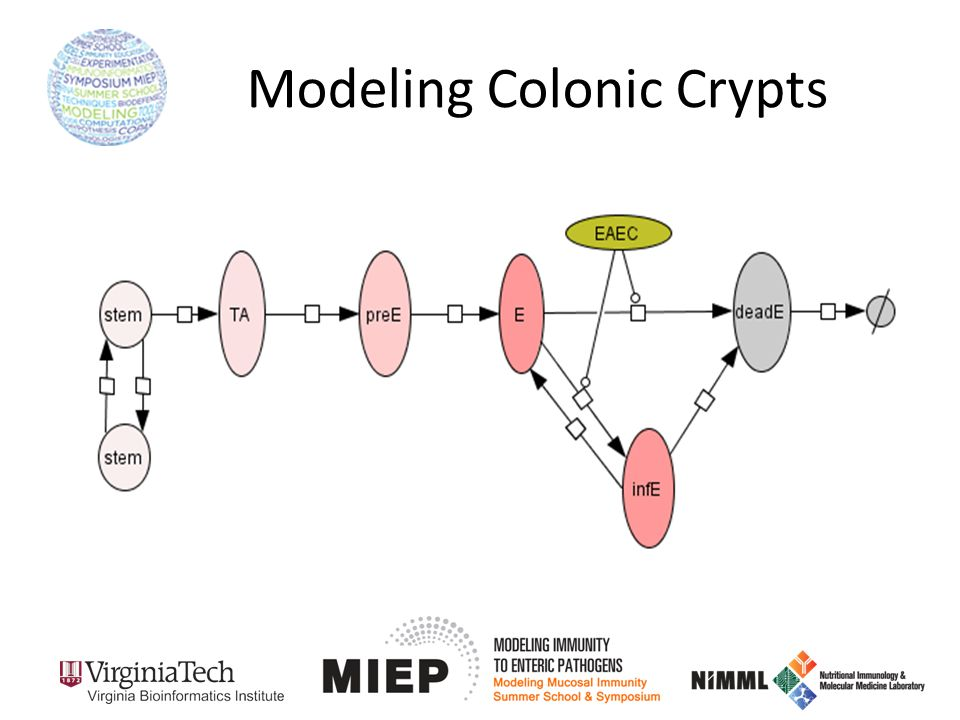 Modeling Colonic Crypts