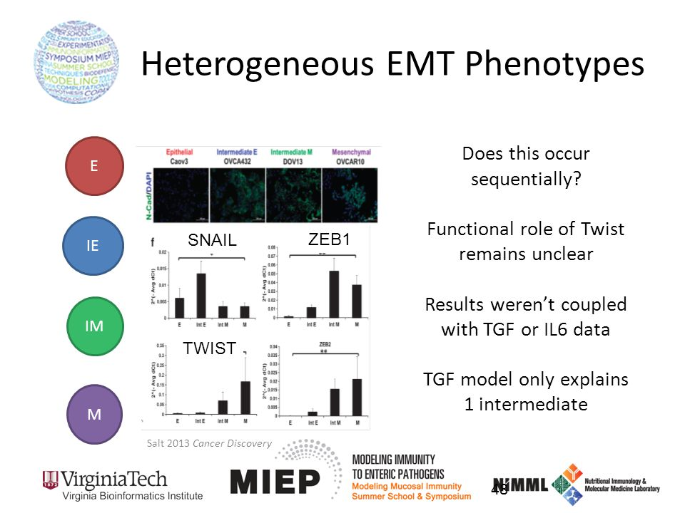 Heterogeneous EMT Phenotypes Does this occur sequentially.
