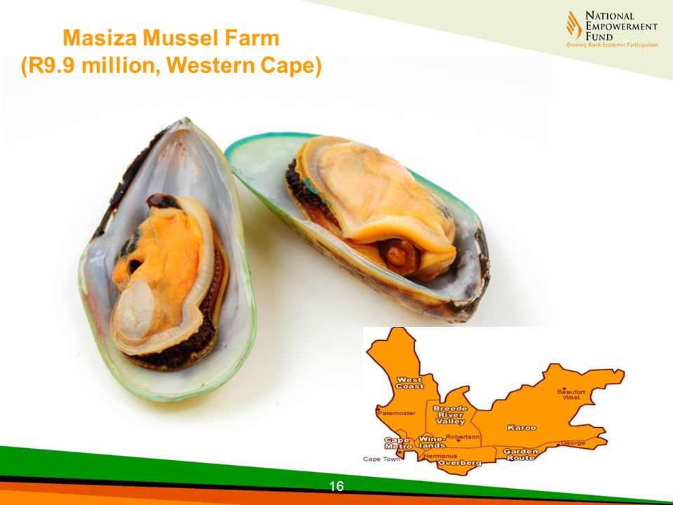 Masiza Mussel Farm (R9.9 million, Western Cape) 16