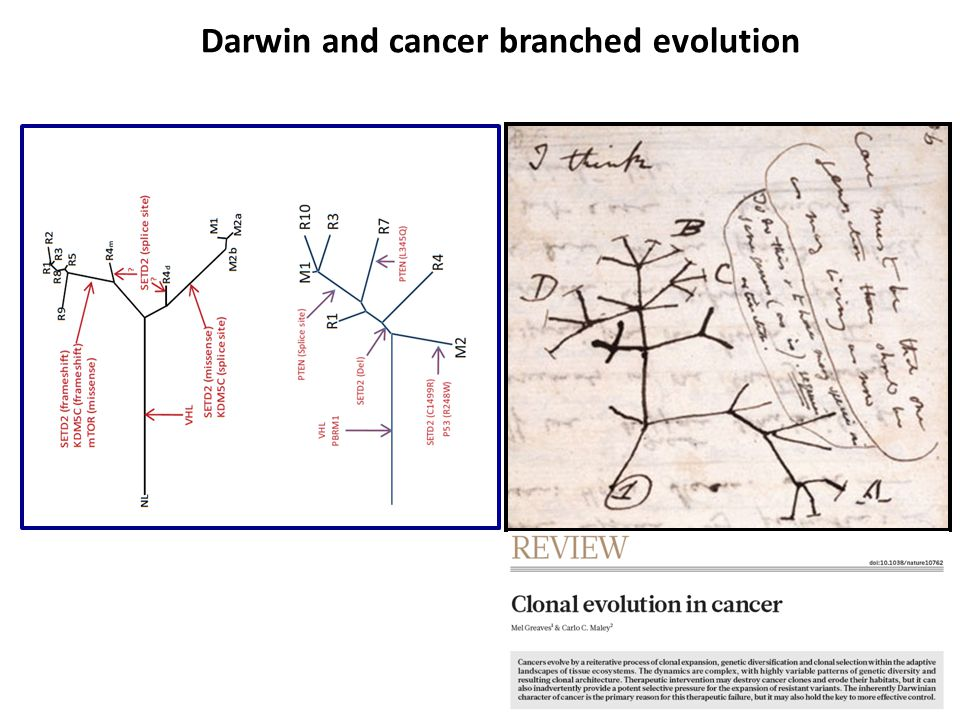 Darwin and cancer branched evolution