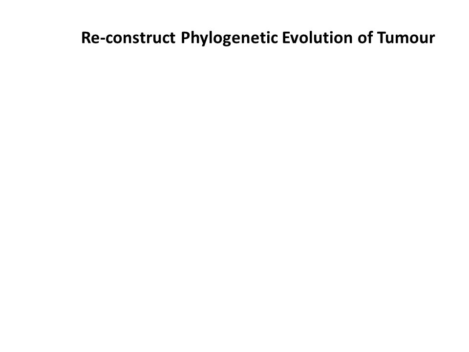 Re-construct Phylogenetic Evolution of Tumour