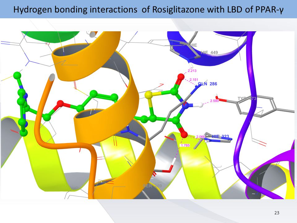 Hydrogen bonding interactions of Rosiglitazone with LBD of PPAR-γ 23