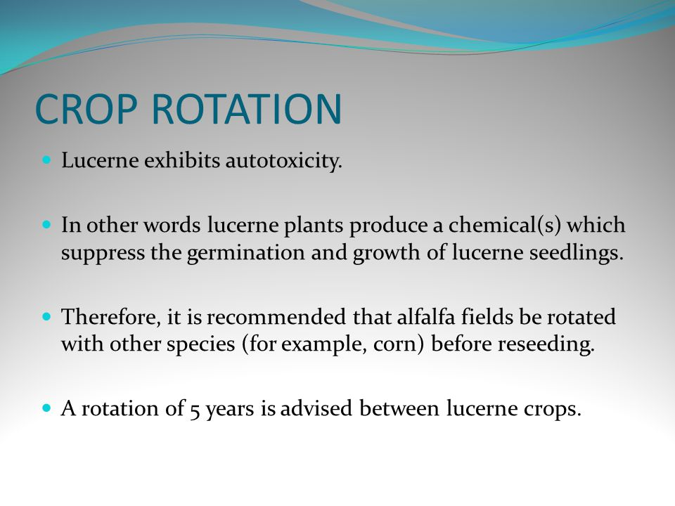CROP ROTATION Lucerne exhibits autotoxicity.