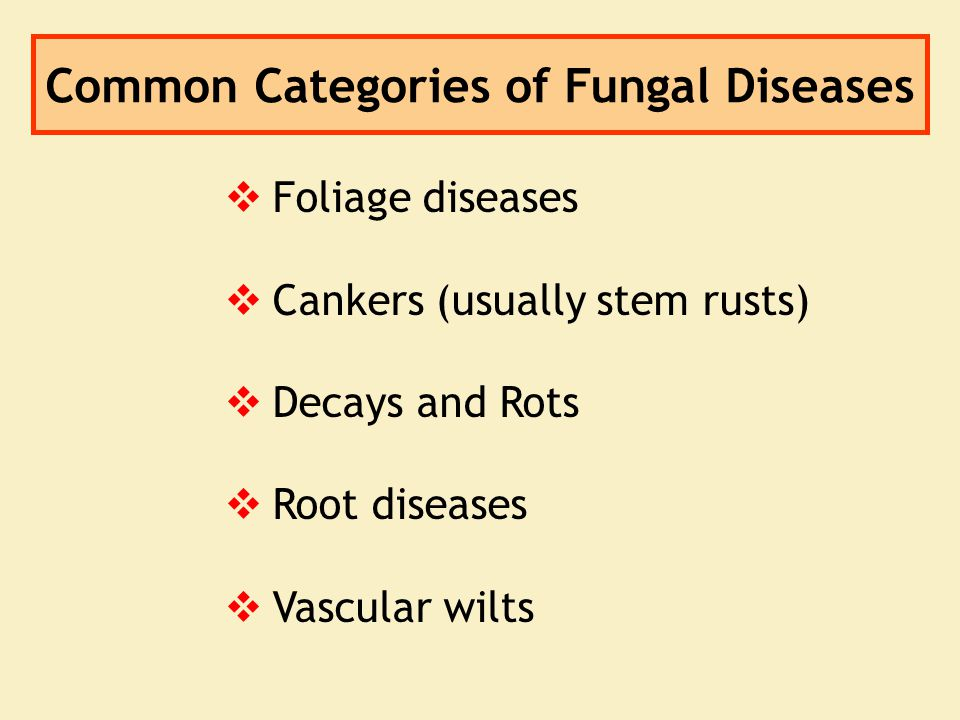Common Categories of Fungal Diseases   Foliage diseases   Cankers (usually stem rusts)   Decays and Rots   Root diseases   Vascular wilts