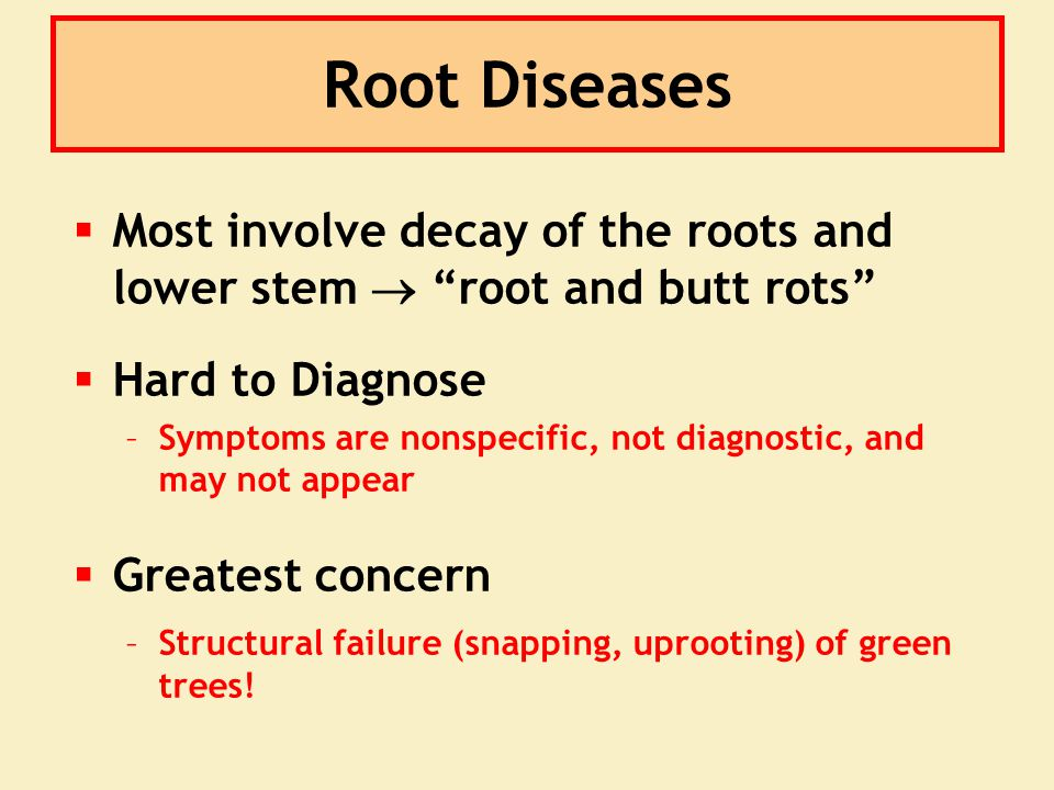 "Root Diseases  Most involve decay of the roots and lower stem  ""root and butt rots""  Hard to Diagnose –Symptoms are nonspecific, not diagnostic, an"