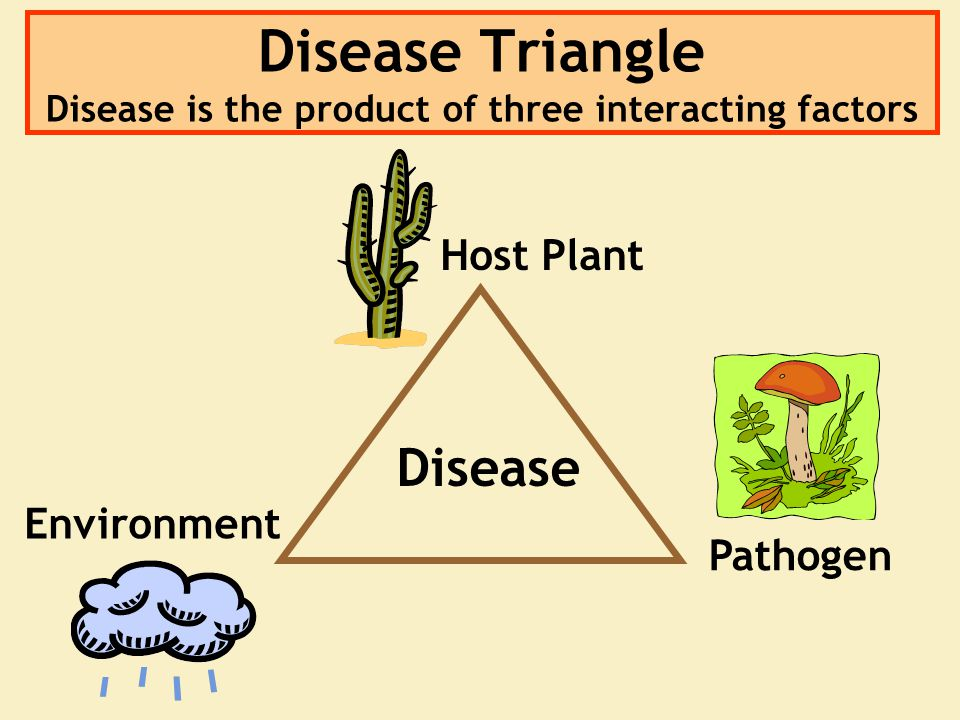 Disease Triangle Disease is the product of three interacting factors Host Plant Environment Pathogen Disease