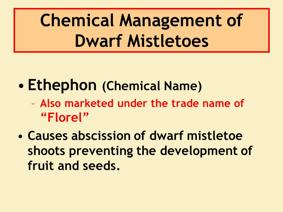 "Ethephon (Chemical Name) –Also marketed under the trade name of ""Florel"" Causes abscission of dwarf mistletoe shoots preventing the development of fru"
