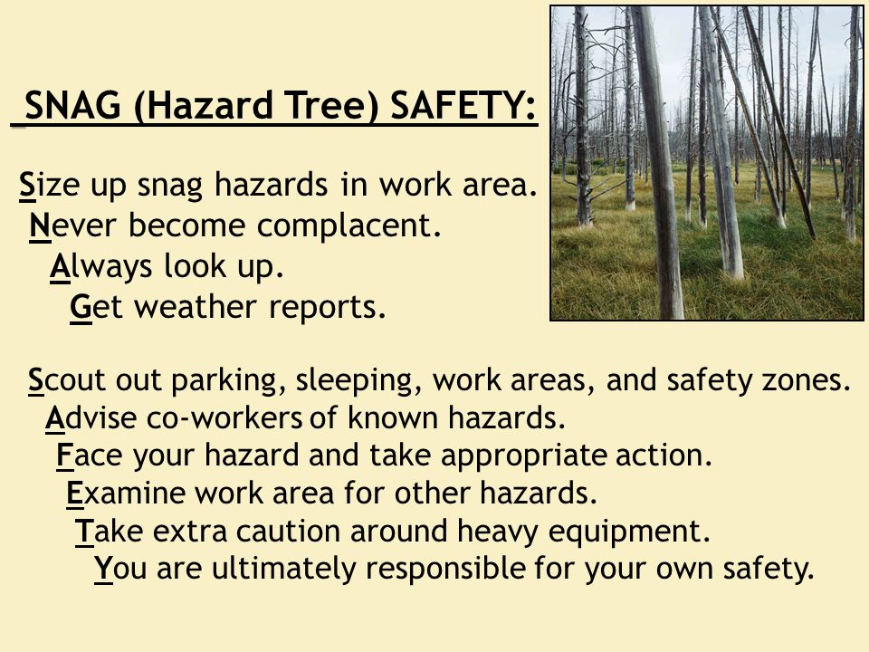Size up snag hazards in work area. Never become complacent. Always look up. Get weather reports. Scout out parking, sleeping, work areas, and safety z