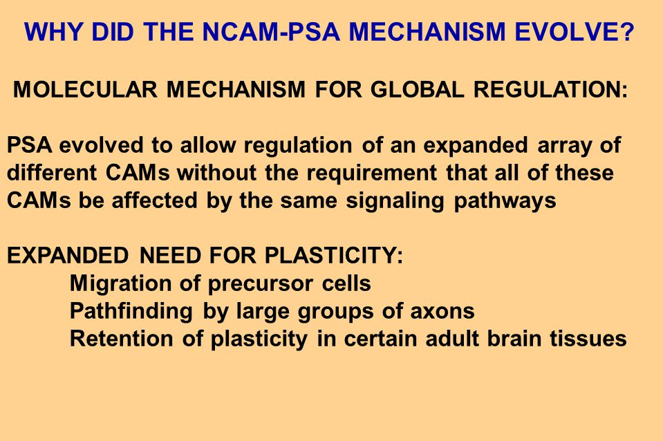 WHY DID THE NCAM-PSA MECHANISM EVOLVE.