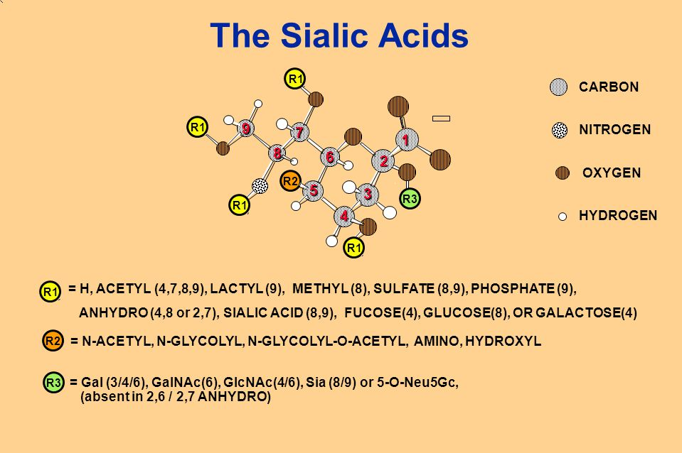 R3R2 The Sialic Acids CARBON NITROGEN OXYGEN HYDROGEN 1 2 3 4 5 6 7 8 9 = H, ACETYL (4,7,8,9), LACTYL (9), METHYL (8), SULFATE (8,9), PHOSPHATE (9), A