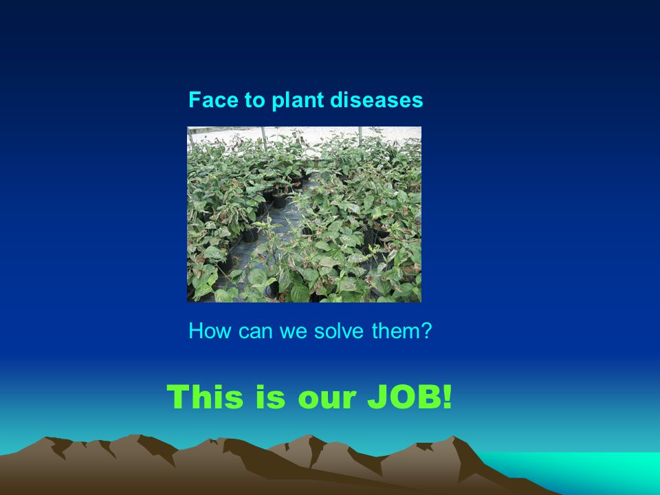 Face to plant diseases How can we solve them? This is our JOB!