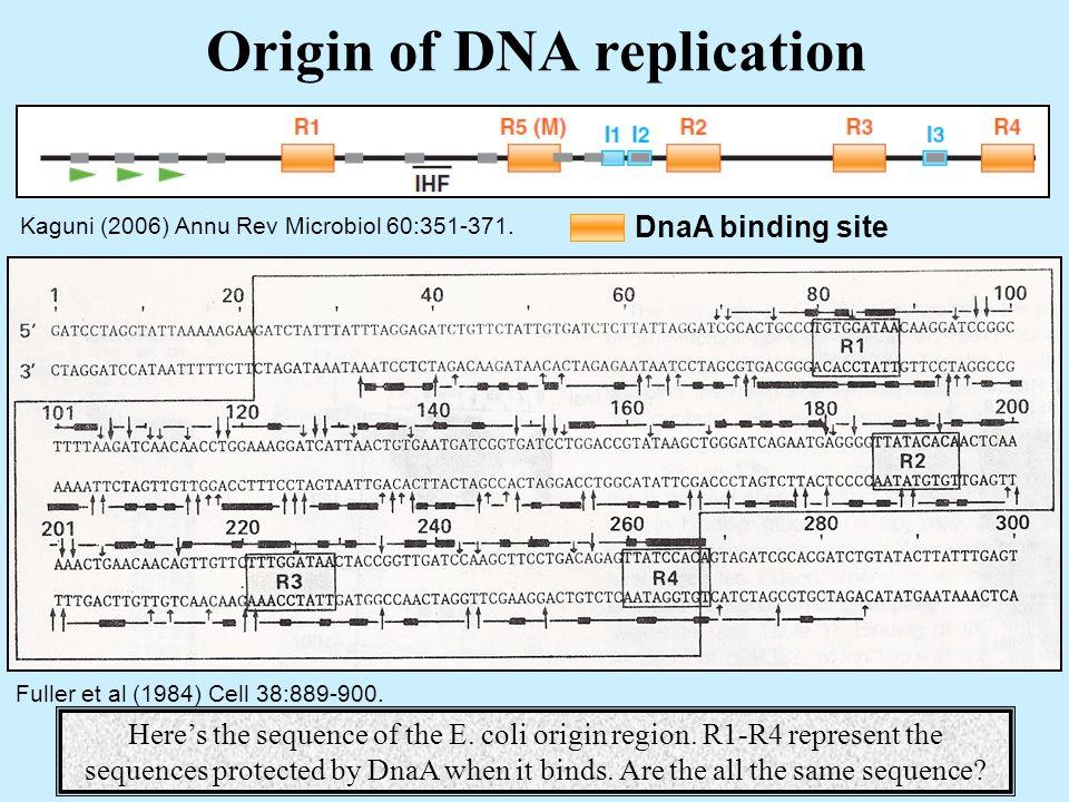 Origin of DNA replication Kaguni (2006) Annu Rev Microbiol 60:351-371.
