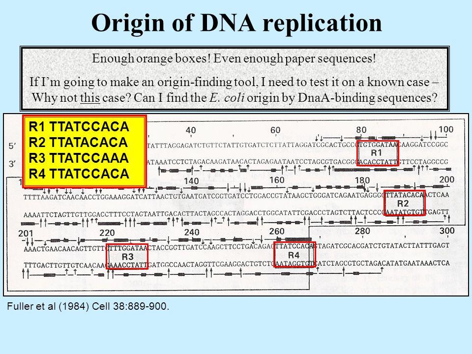 Origin of DNA replication Fuller et al (1984) Cell 38:889-900.