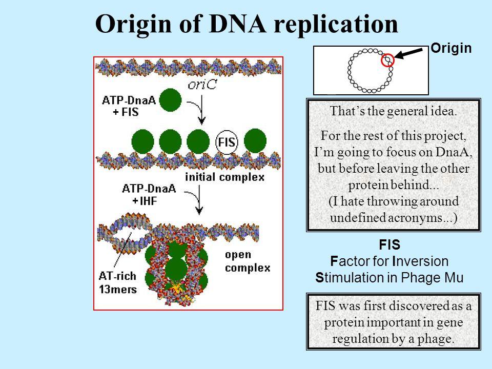 Origin of DNA replication Origin + + FIS Factor for Inversion Stimulation in Phage Mu That's the general idea.