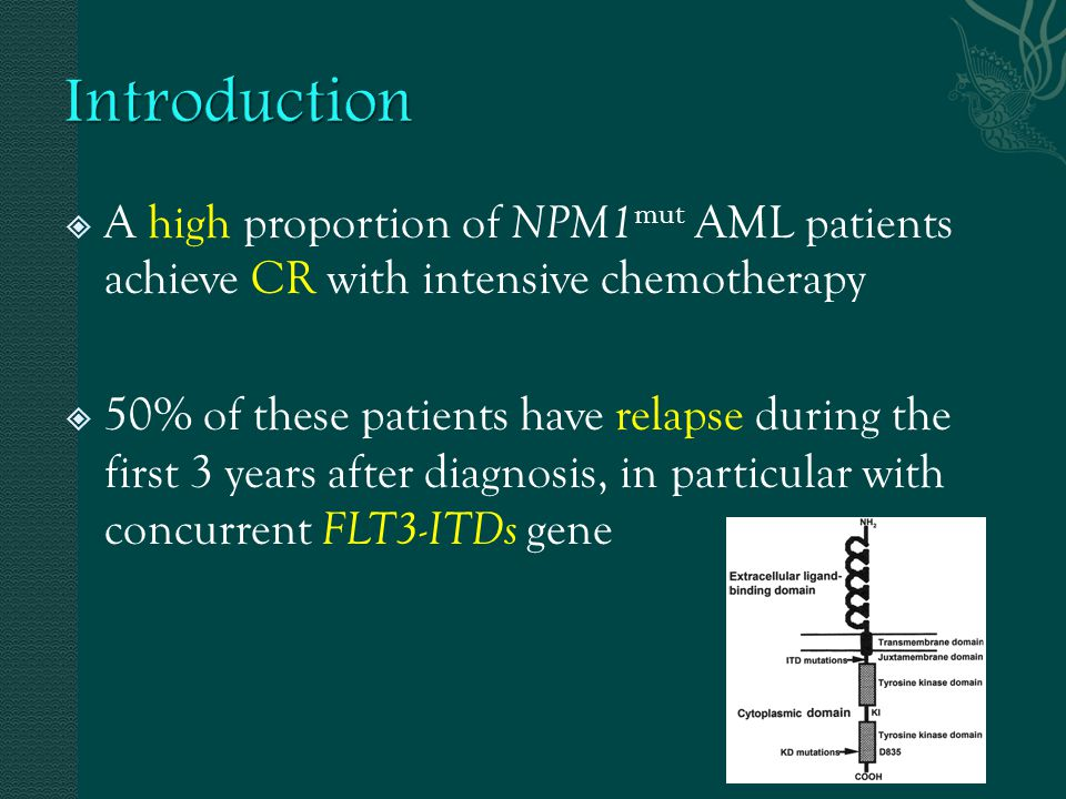  A high proportion of NPM1 mut AML patients achieve CR with intensive chemotherapy  50% of these patients have relapse during the first 3 years afte