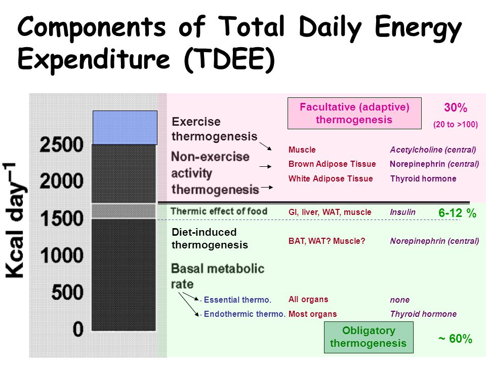 Exercise thermogenesis Facultative (adaptive) thermogenesis Obligatory thermogenesis - Essential thermo. - Endothermic thermo. Diet-induced thermogene