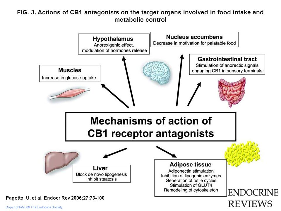 Copyright ©2006 The Endocrine Society Pagotto, U. et al. Endocr Rev 2006;27:73-100 FIG. 3. Actions of CB1 antagonists on the target organs involved in