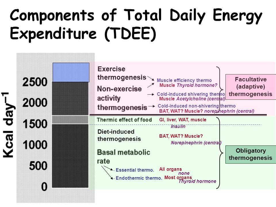 Components of Total Daily Energy Expenditure (TDEE) Obligatory thermogenesis Facultative (adaptive) thermogenesis Exercise thermogenesis - Essential t