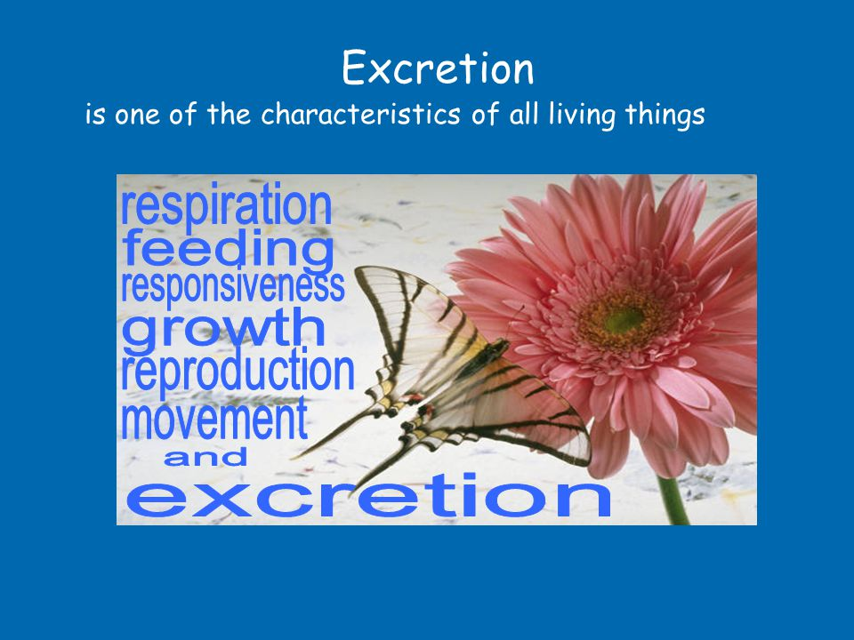 Excretion Excretion is the removal of toxic chemical substances Toxic substances are poisonous and can harm the cells of the body if not removed