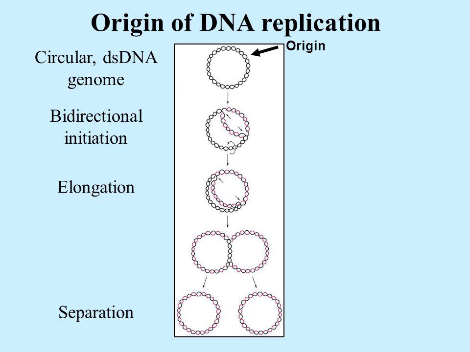 Origin of DNA replication Origin