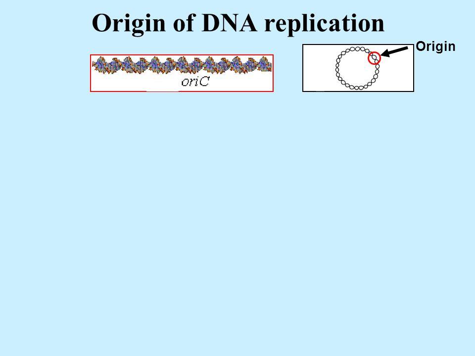 Origin of DNA replication Origin +