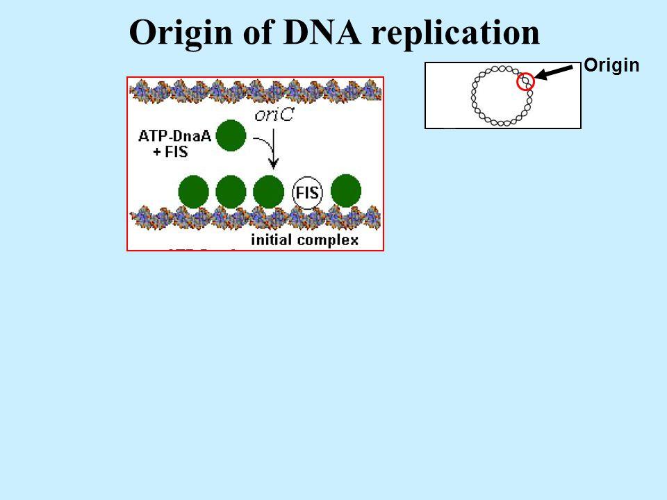 Origin of DNA replication Origin + + FIS Factor for Inversion Stimulation in Phage Mu IHF Integration Host Factor for lysogeny of Phage Lambda