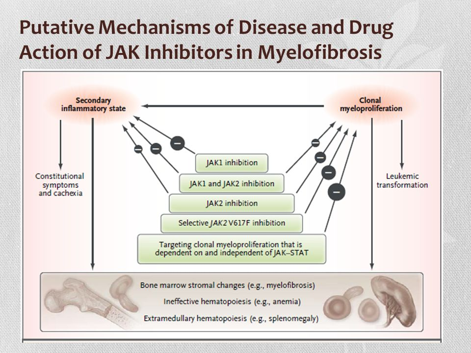 Putative Mechanisms of Disease and Drug Action of JAK Inhibitors in Myelofibrosis