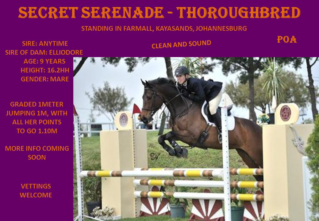 SECRET SERENADE - THOROUGHBRED STANDING IN FARMALL, KAYASANDS, JOHANNESBURG VETTINGS WELCOME CLEAN AND SOUND poA SIRE: ANYTIME SIRE OF DAM: ELLIODORE AGE: 9 YEARS HEIGHT: 16.2HH GENDER: MARE GRADED 1METER JUMPING 1M, WITH ALL HER POINTS TO GO 1.10M MORE INFO COMING SOON