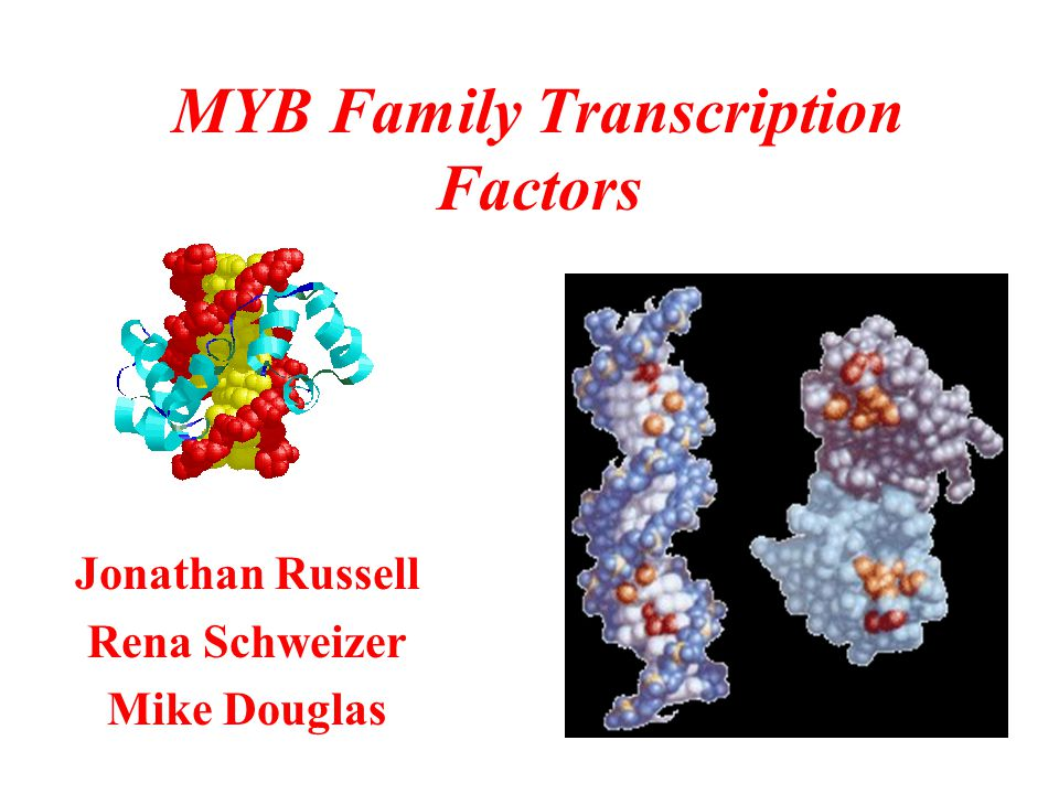 MYB Family Transcription Factors Jonathan Russell Rena Schweizer Mike Douglas