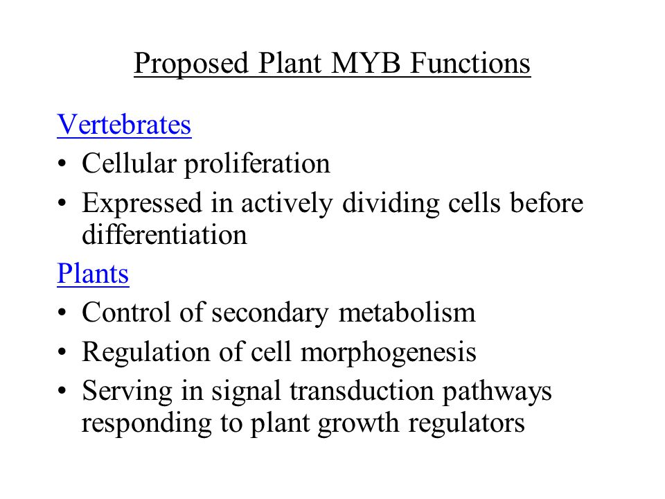 Proposed Plant MYB Functions Vertebrates Cellular proliferation Expressed in actively dividing cells before differentiation Plants Control of secondary metabolism Regulation of cell morphogenesis Serving in signal transduction pathways responding to plant growth regulators