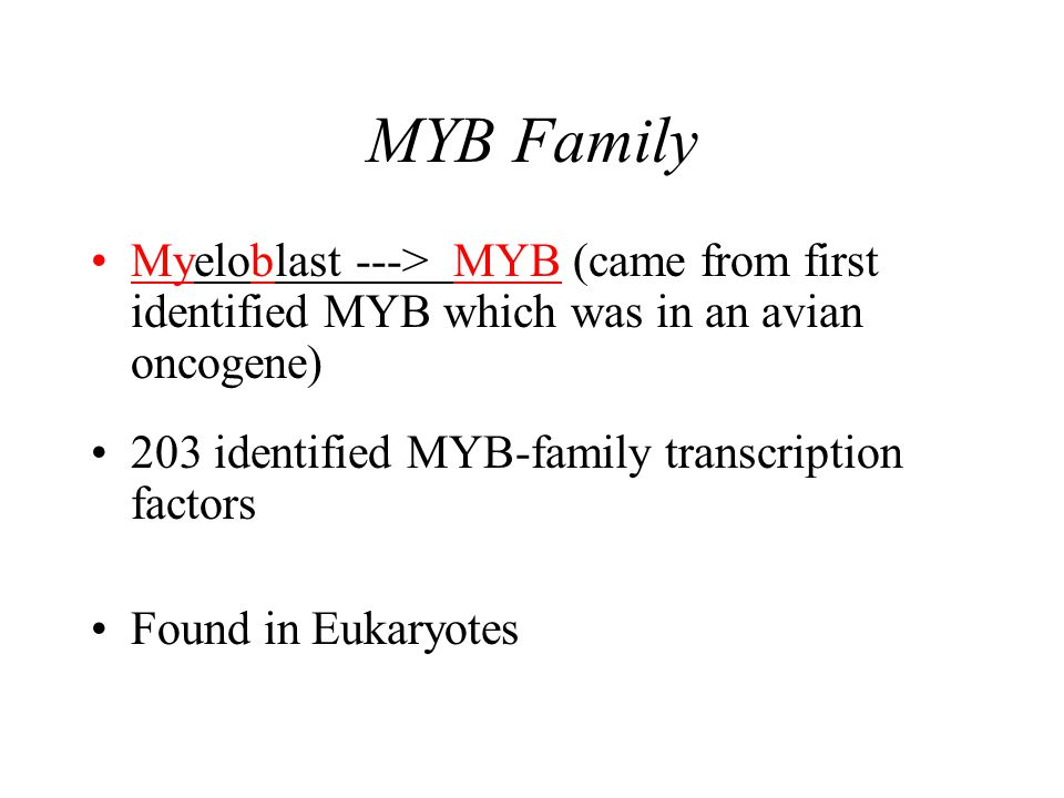 MYB Family Myeloblast ---> MYB (came from first identified MYB which was in an avian oncogene) 203 identified MYB-family transcription factors Found in Eukaryotes