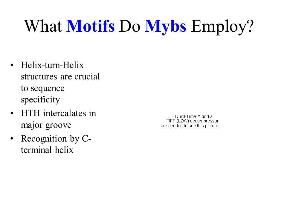 What Motifs Do Mybs Employ.