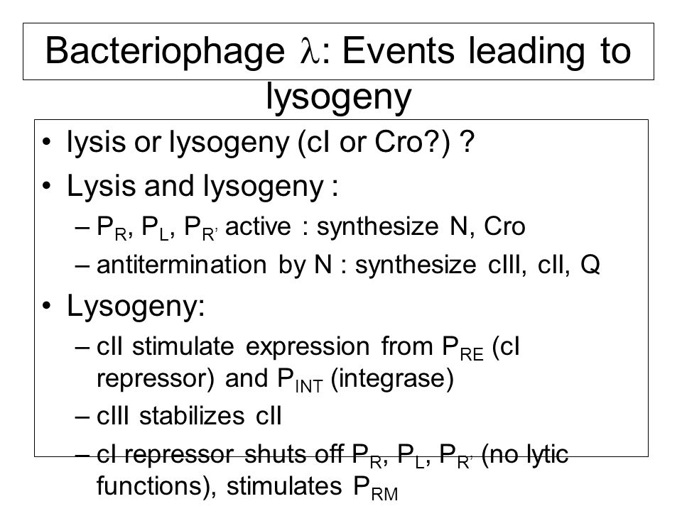 Bacteriophage : Events leading to lysogeny lysis or lysogeny (cI or Cro ) .