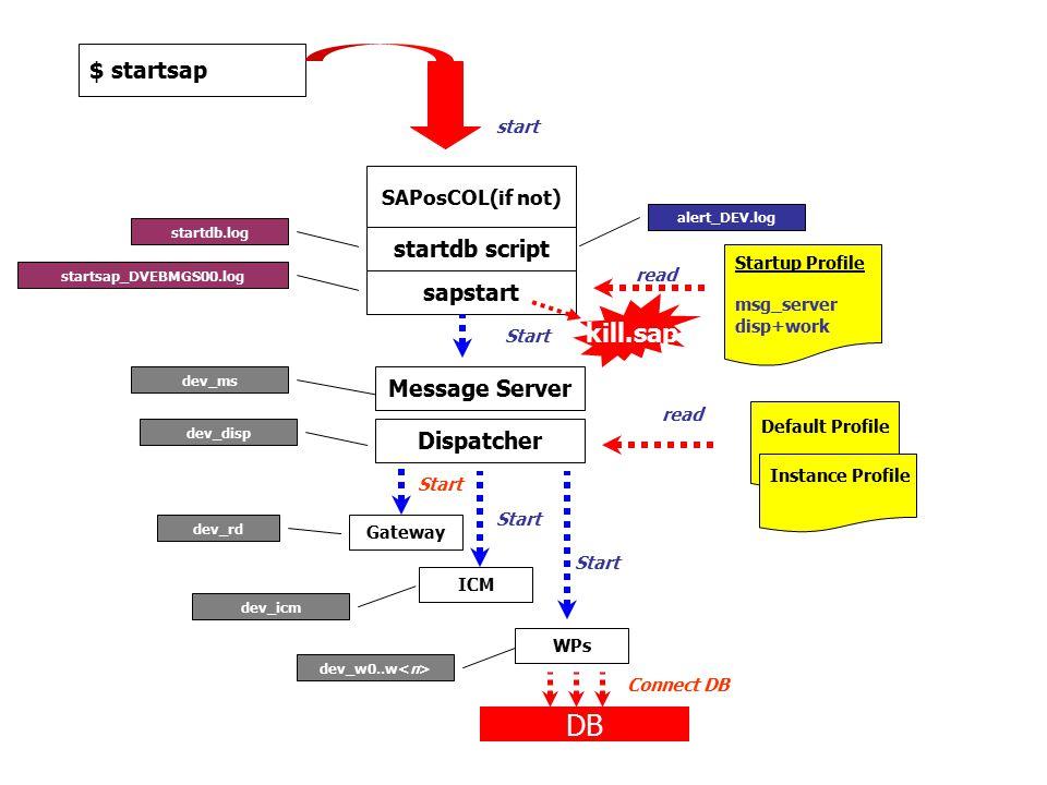 $ startsap SAPosCOL(if not) start Startup Profile msg_server disp+work startdb script Message Server Dispatcher Default Profile Instance Profile Gatew
