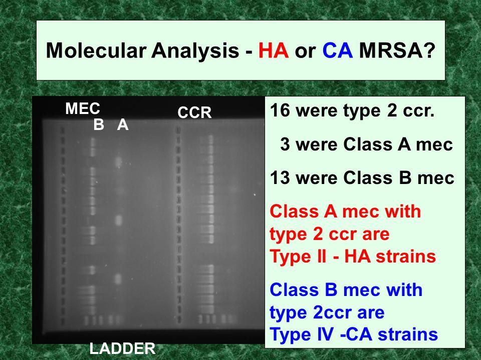 Molecular Analysis - HA or CA MRSA? MEC CCR LADDER BA 16 were type 2 ccr. 3 were Class A mec 13 were Class B mec Class A mec with type 2 ccr are Type
