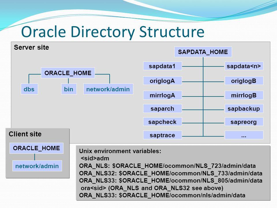 Oracle Directory Structure Server site dbsbinnetwork/admin ORACLE_HOME origlogB mirrlogB sapdata sapbackup sapreorg...