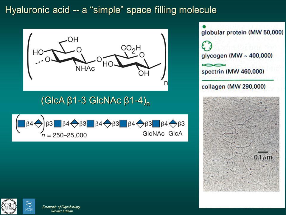 Hyaluronic acid -- a simple space filling molecule (GlcA β1-3 GlcNAc β1-4) n Essentials of Glycobiology Second Edition