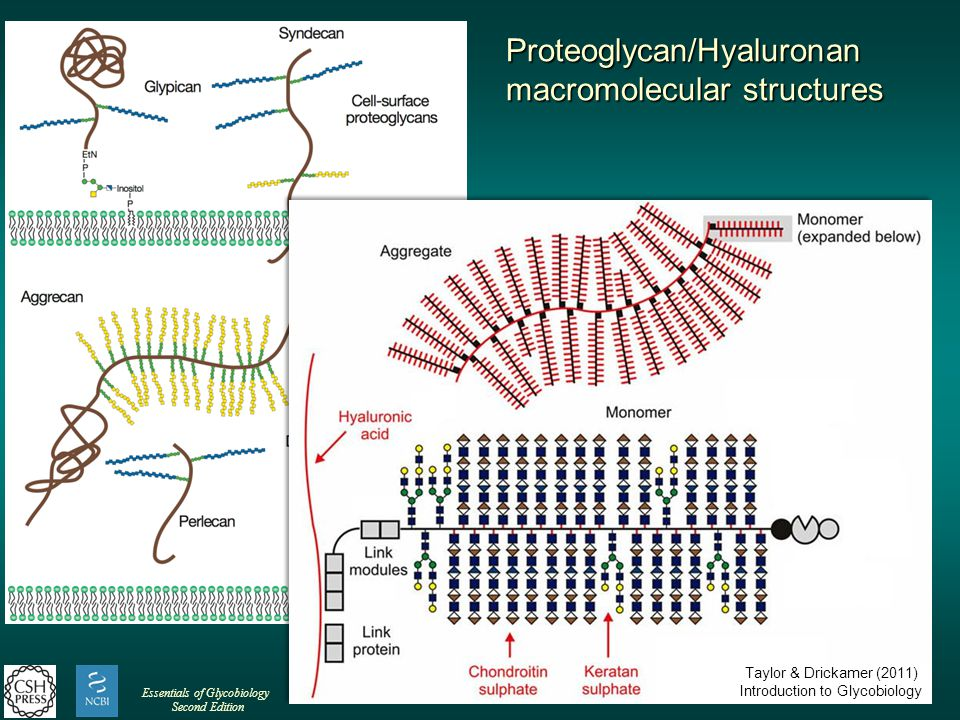 Essentials of Glycobiology Second Edition Proteoglycan/Hyaluronan macromolecular structures Taylor & Drickamer (2011) Introduction to Glycobiology