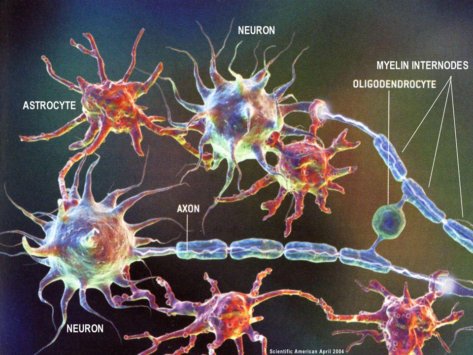 Delcomyn, F. (1998) Foundations of Neurobiology. W.H. Freeman, New York.