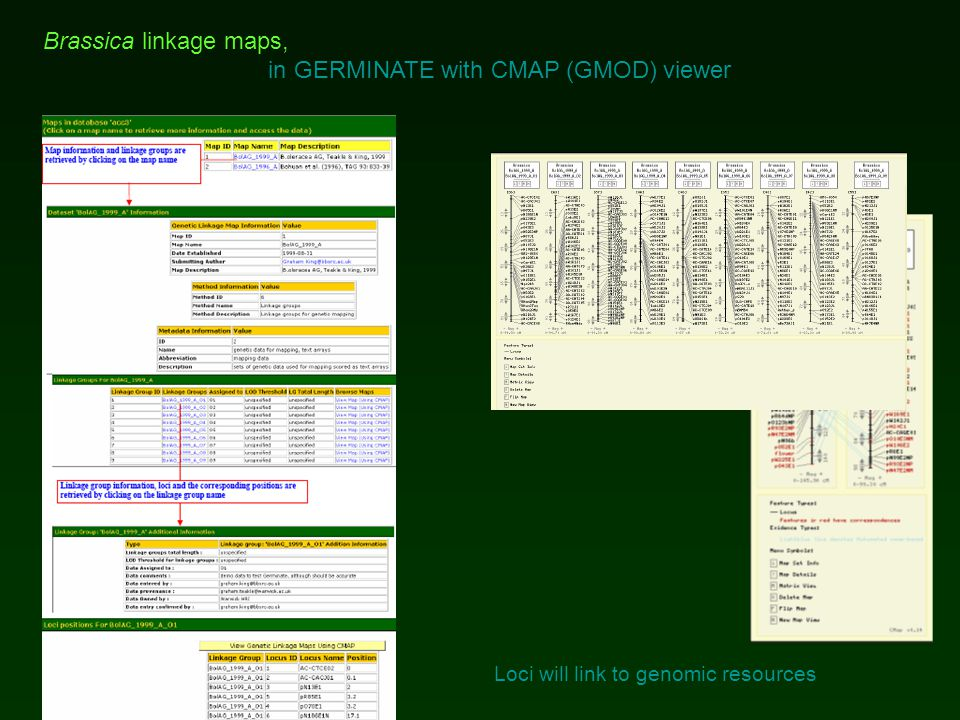 Brassica linkage maps, in GERMINATE with CMAP (GMOD) viewer Loci will link to genomic resources